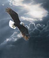 storm-bald-eagleSMALL