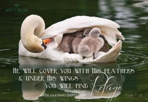 he-will-cover-you-with-his-feathers-under-his-wings-you-will-find-refuge-_image-by-sweet-to-the-soul